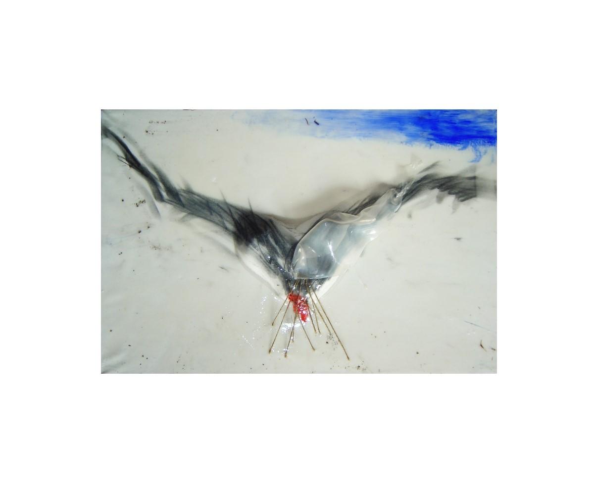 Opere Aldo Palma: Falco